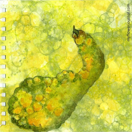 Fall Botanical Bubble Art Tutorial-squash in the bubbles-myflowerjournal