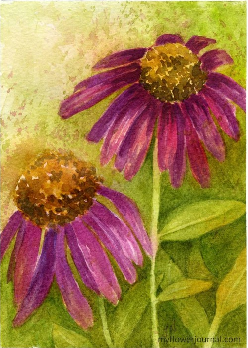 Purple Cone Flower painted in watercolor with some negative painting-myflowerjournal.com