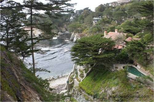 Thinking About Carmel-by-the Sea-What a beautiful place to visit!-myflowerjournal