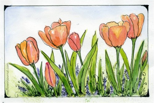 Tulip Watercolor Painting with a simple border-myflowerjournal