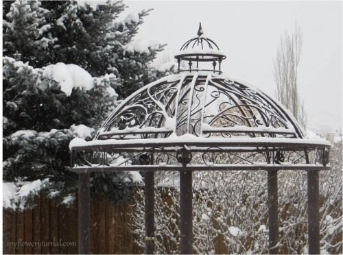 Mother Nature turns our Utah backyard into a winter wonderland-myflowerjournal