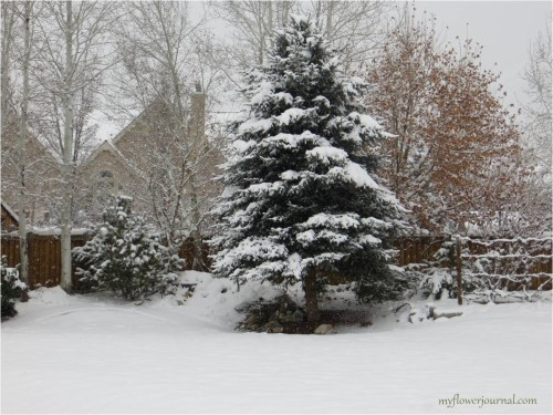 Utah winter wonderland in our backyard-myflowerjournal