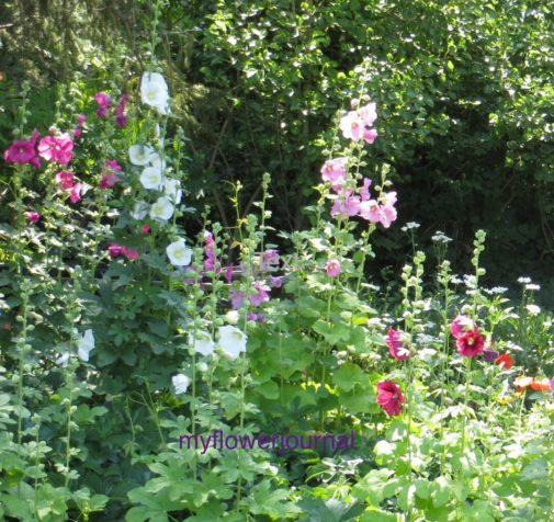 I use flower photos I take when I travel for inspiration for my splattered paint flower art-myflowerjournal.com