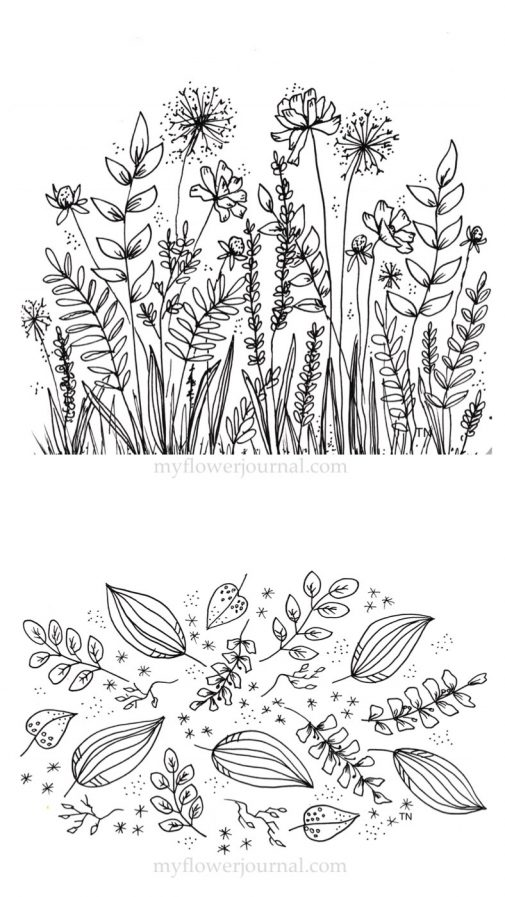 Practicing botanical line drawing helped me draw these black and white botanical doodles. myflowerjournal.com