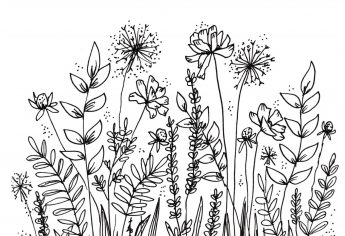 My Botanical Line Drawings and Doodles