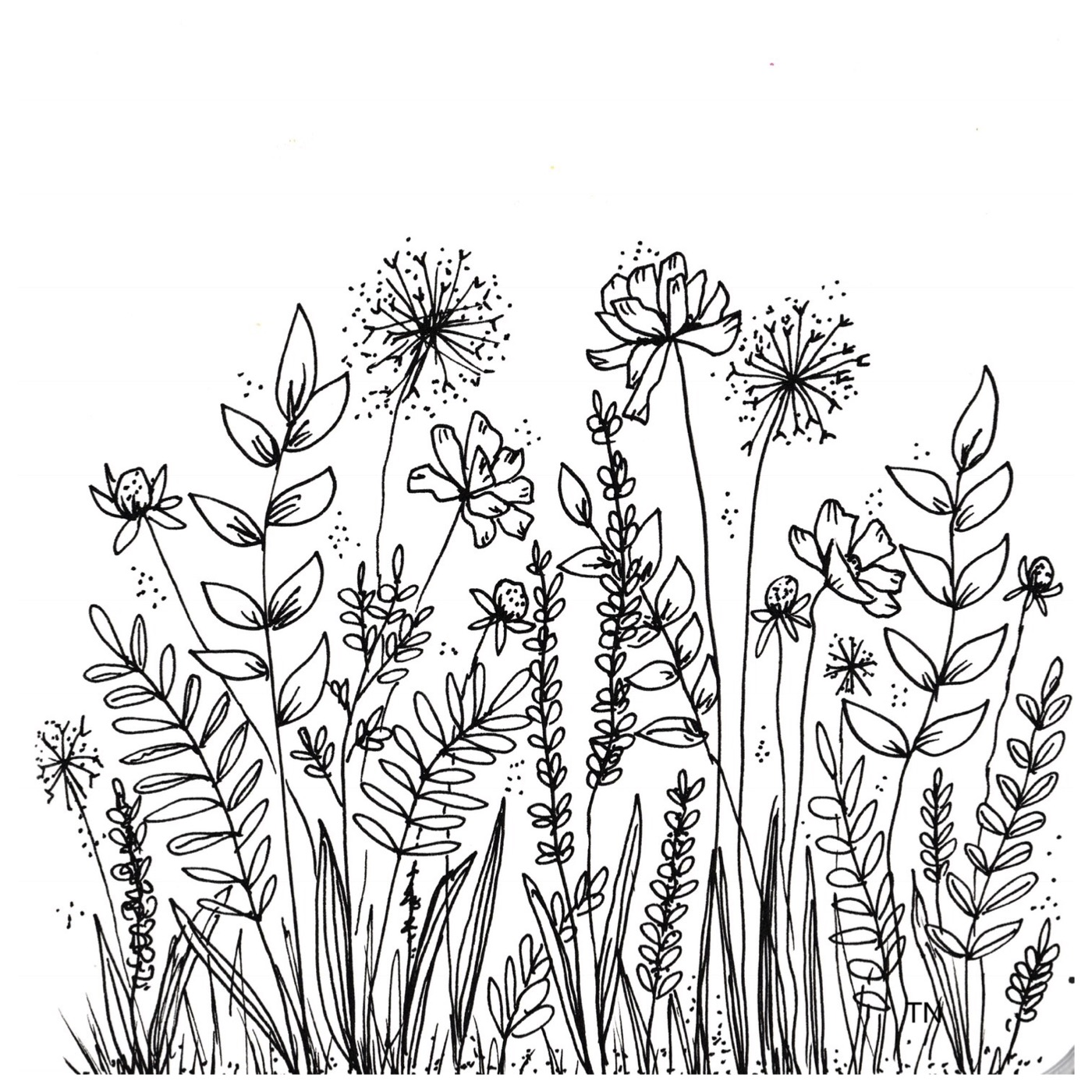 Botanical Flower Line Drawing : Botanical line drawings and doodles
